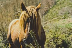 Brown horse staring. Warm tones. Green background stock photography