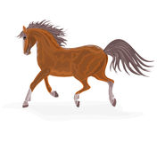 Brown horse. Vector illustration eps 8  without gradients Royalty Free Stock Photos