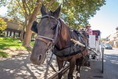 Horse and carriage in Sacramento, California royalty free stock image