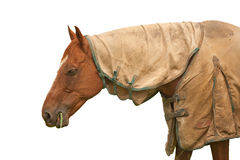 Brown horse white background Royalty Free Stock Photos