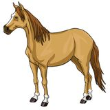 Brown Horse White Head. Illustration Royalty Free Stock Photo