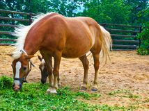 The horse and the foal are grazing stock images