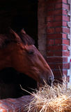 Brown horse in window Stock Image