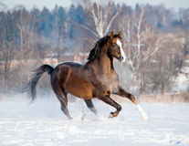Brown horse in winter Royalty Free Stock Photography