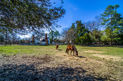 Brown horses in Colonial Williamsburg Royalty Free Stock Image