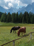 Brown Horses Pasturing in Grazing Lands: Italian Dolomites Alps Stock Photos