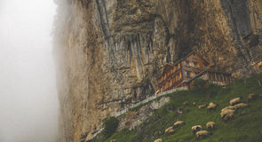 Brown House and Brown Animal at the Mountains during Foggy Weather Royalty Free Stock Image
