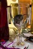 An unwanted wild house mouse as an after party cleanup crew. A brown house mouse stuck in a long stemmed wine glass. There is a row of multicolored bottles Stock Image