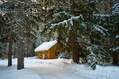 Brown House Near Pine Trees Covered With Snow royalty free stock image