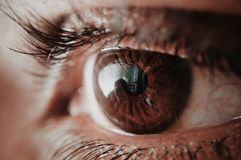 Brown Human Eye Stock Images