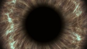 Brown human eye dilating and contracting. Very detailed extreme close-up of iris and pupil.