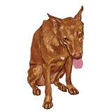 Brown-Hund Lizenzfreie Stockbilder