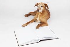 Brown-Hund, der durch ein offenes Buch liegt Stockbild