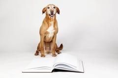 Brown-Hund, der durch ein offenes Buch sitzt Lizenzfreies Stockbild