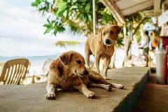 Brown-Hund, der in einem Restaurant auf einer sandigen Insel sitzt lizenzfreies stockbild