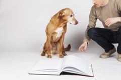 Brown-Hund mit dem Mann, der durch ein offenes Buch sitzt Lizenzfreie Stockbilder