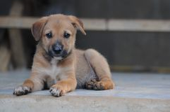 Brown-Hund nett auf Haus stockfoto