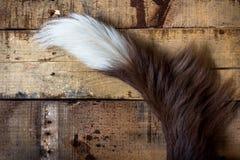 Brown-Hundeendstück Stockfoto