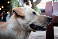 Brown-Hundesitzen im Freien Stockfotos