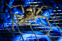 Brown huntsman spider on electric mosquito bat Stock Images
