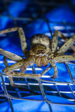 Brown huntsman spider on electric mosquito bat Stock Photo