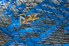 Brown huntsman spider on electric mosquito bat Royalty Free Stock Photos