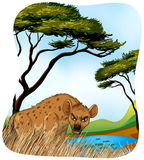 Brown hyena in nature Royalty Free Stock Photos