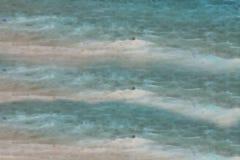 Brown i błękitny wallpeper Zdjęcie Stock