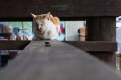 Brown i biały kota dosypianie na drewnianej desce Obraz Royalty Free