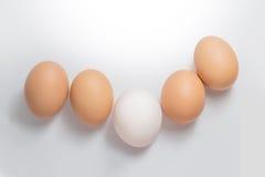 Brown i biali jajka na białym tle zdjęcie stock