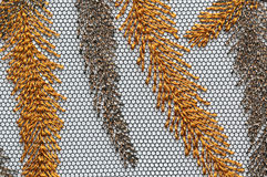 Brown i pomarańcze siatka zasznurowywa materialnej tekstury makro- strzał Obrazy Royalty Free