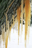 Brown icicles Royalty Free Stock Image