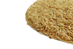 Brown-Indica Reis, Seitenansicht Lizenzfreies Stockbild
