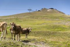Brown intimorisce il pascolo in alpi italiane con la teleferica nel fondo Fotografie Stock Libere da Diritti