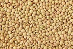 Brown Italian Lentils Royalty Free Stock Photos