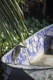 Brown Ixobrychus lub ptaka sinensis na łodzi w kanale zdjęcia stock