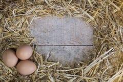 Brown jajek organicznie kurczak na słomie Obrazy Stock