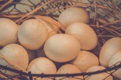 Brown jajka przy sianem gniazdują w kurczaka gospodarstwie rolnym przedstawiającym w postaci Fotografia Royalty Free