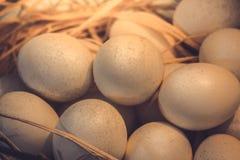 Brown jajka przy sianem gniazdują w kurczaka gospodarstwie rolnym przedstawiającym w postaci Obrazy Stock