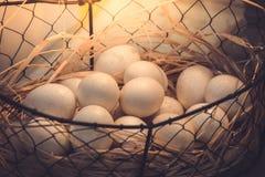 Brown jajka przy sianem gniazdują w kurczaka gospodarstwie rolnym przedstawiającym w postaci Zdjęcie Stock