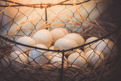 Brown jajka przy sianem gniazdują w kurczaka gospodarstwie rolnym przedstawiającym w postaci Fotografia Stock