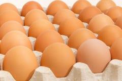 Brown jajka w jajecznej tacy przy w górę selekcyjnej ostrości obrazy royalty free