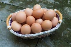 Brown jajka w koszu Obraz Stock
