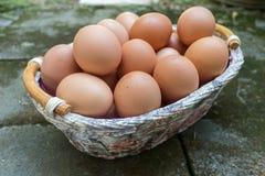 Brown jajka w koszu Zdjęcie Stock