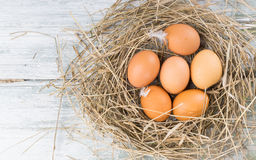 Brown jajka w sianie Obraz Stock