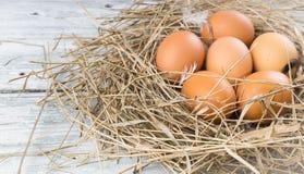 Brown jajka w sianie Obraz Royalty Free