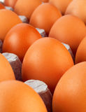 Brown jajka zbliżenie Obrazy Stock