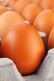 Brown jajka zbliżenie Fotografia Royalty Free