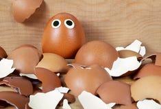 Brown jajko i mnóstwo łamana skorupa Zdjęcia Stock