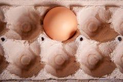 Brown jajko w tacy zdjęcia royalty free